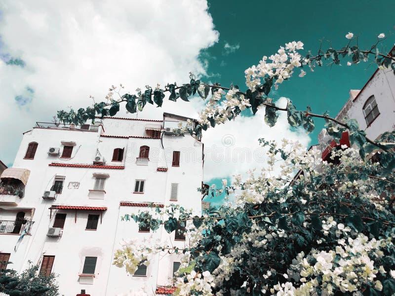 Жилые дома цветут ветвь дерева в Rishon Le Сион, Израиле стоковое фото rf