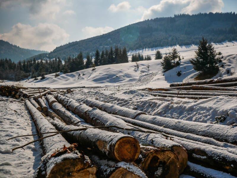 Журналы сосны около соснового леса, схематического изображения обезлесения стоковое изображение