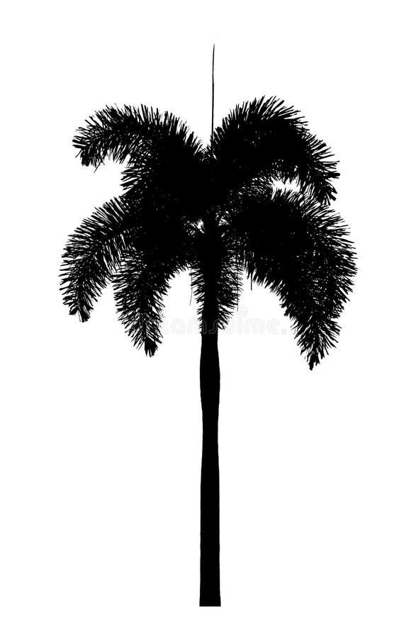 Заводы силуэта пальмы орнаментальные красивые на белых символах номера два backgroundhand показывая на белой предпосылке стоковое фото