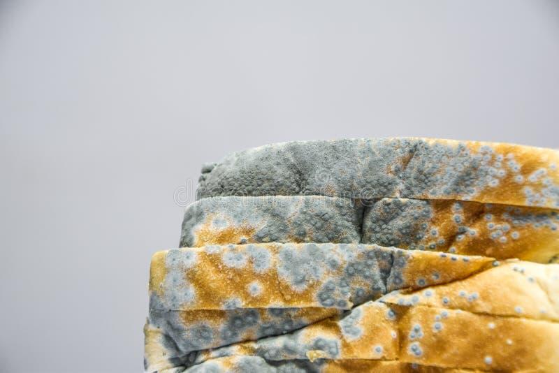 Закройте вверх moldy хлеба на белой предпосылке, терял силу не смогите съесть больше потому что вредно к здоровью стоковые изображения