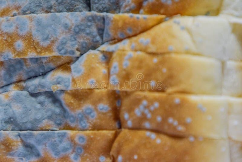 Закройте вверх moldy хлеба, терял силу не смогите съесть больше потому что вредно к здоровью стоковое изображение