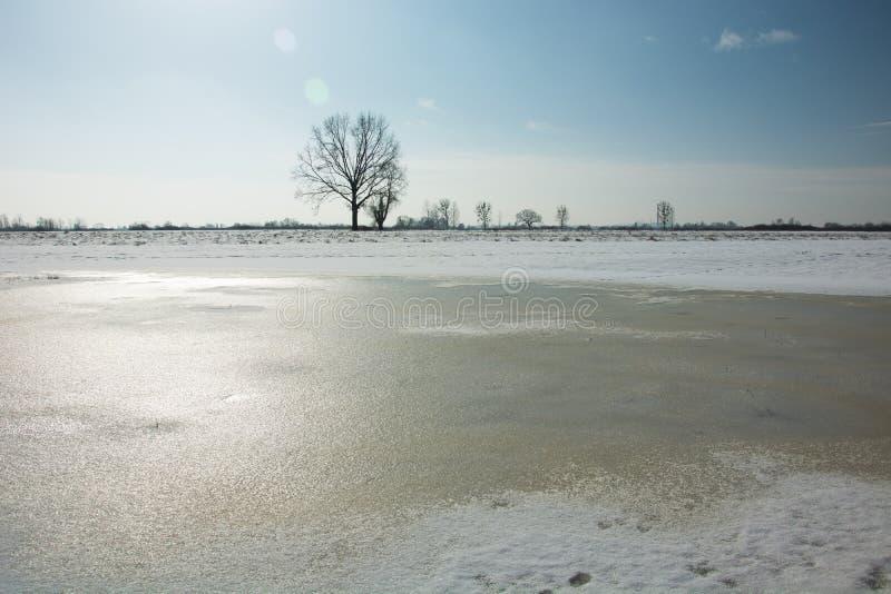 Замерли вода и снег в луге, сиротливое дерево на горизонте и безоблачное небо стоковые фотографии rf