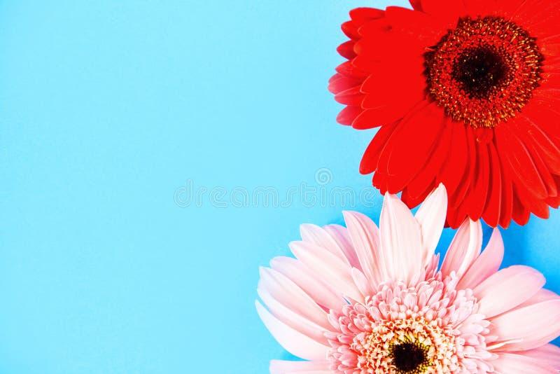 Зацветать красного и розового лета цветков весны gerbera красивый на сини стоковая фотография rf