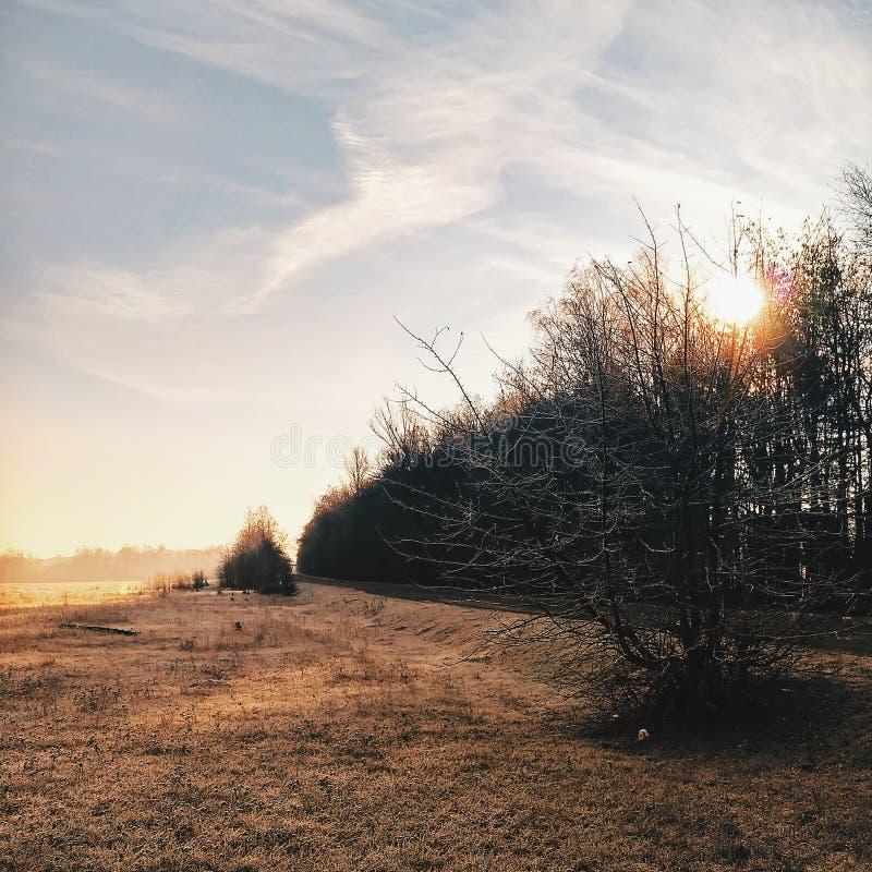 Заход солнца на поле осени Замороженная оранжевая трава стоковая фотография rf