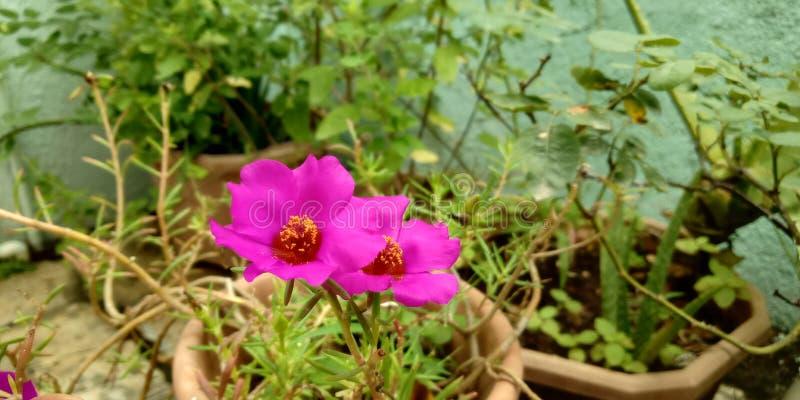 Защищая цветок стоковое изображение