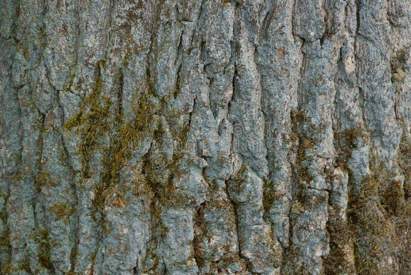 Зеленая естественная текстура и мох коры на древесине стоковое изображение