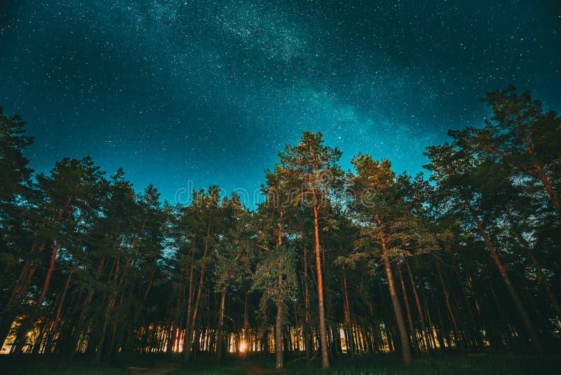 Зеленые древесины деревьев в парке под небом ночи звёздным с галактикой млечного пути Ландшафт ночи с естественными реальными нак стоковое изображение