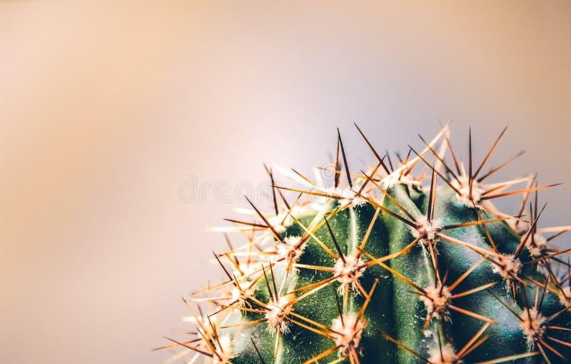 Зеленый кактус с длинными колючками на бежевой предпосылке экзотическо Весна здесь снова Яркое изображение с местом для надписи стоковое изображение rf