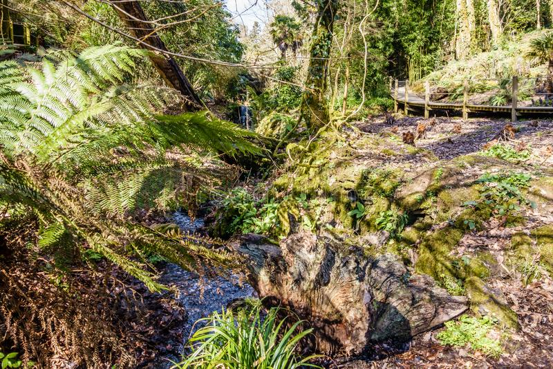 Зеленый ландшафт с небольшим потоком через джунгли заводов стоковая фотография rf