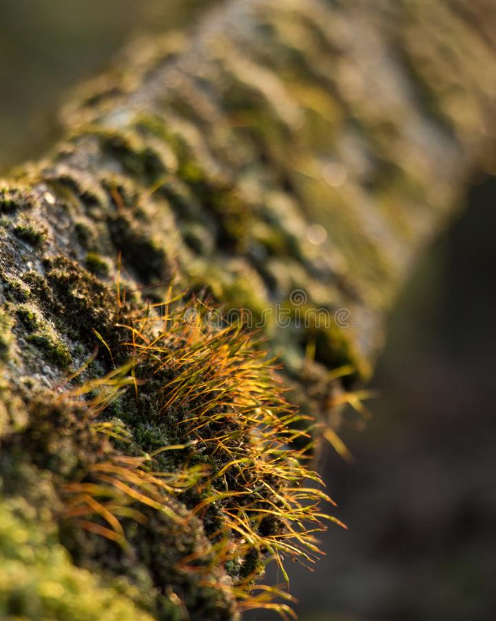 Зеленый цвет Closs-Up природного парка загородки coverd мха стоковые изображения rf