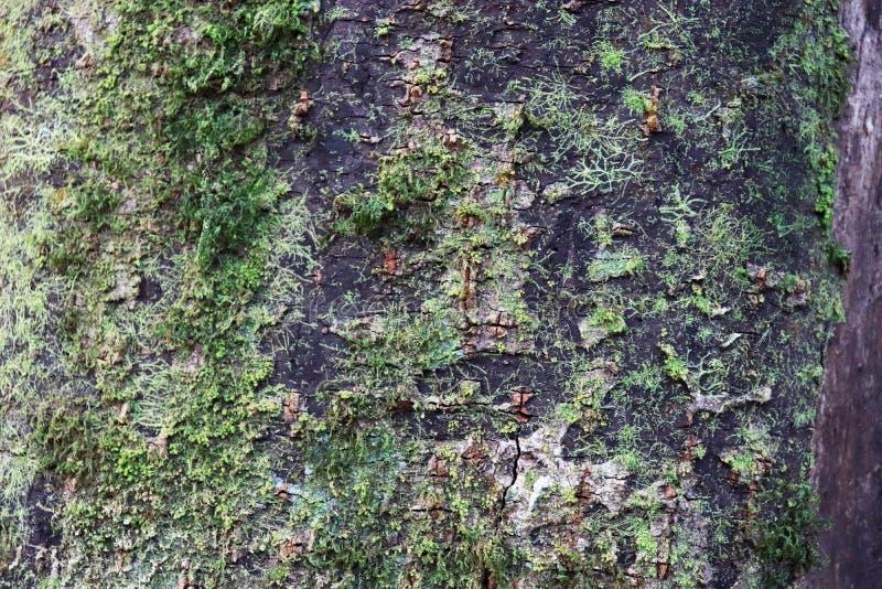 Зеленый mos на дереве и леса отображают предпосылка стоковые изображения