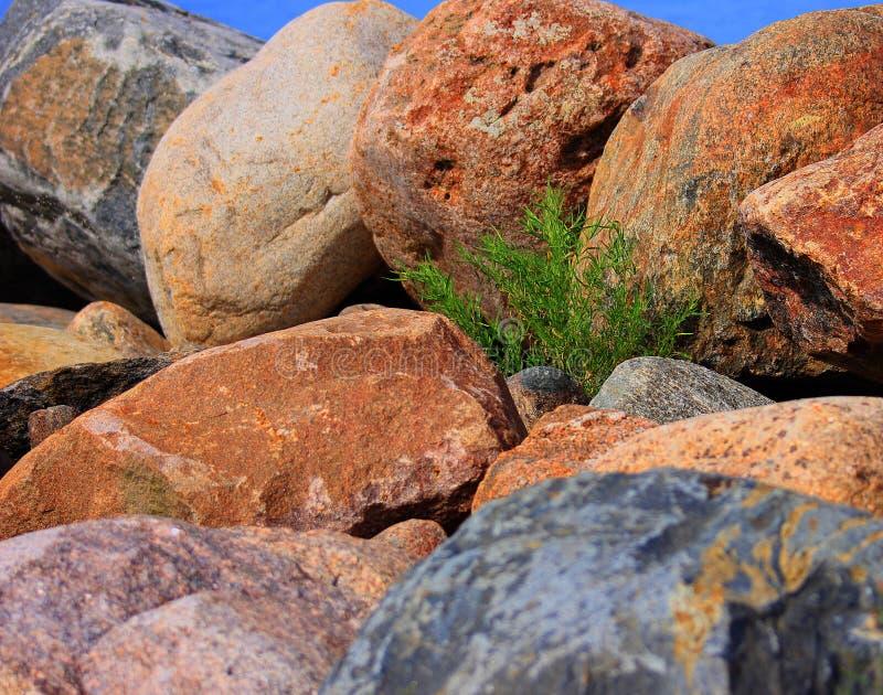 Зеленое растение между большими утесами стоковое фото rf