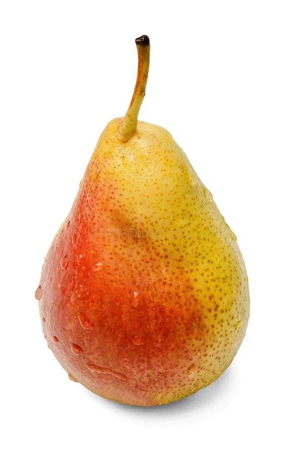 Зрелая свежая груша на белой изолированной предпосылке Желт-красный плод Падения воды стоковые изображения