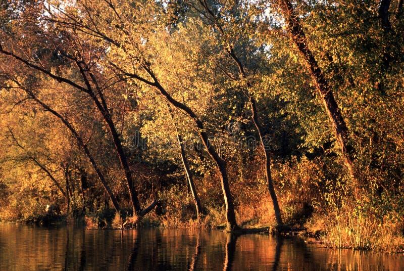 Золотые деревья на Seneca в Мэриленде стоковая фотография rf