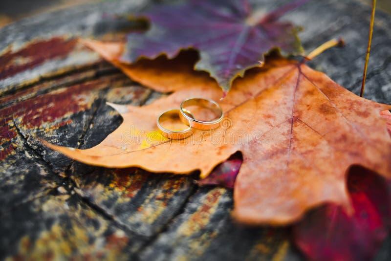 Золотые обручальные кольца на кленовых листах осени стоковое фото