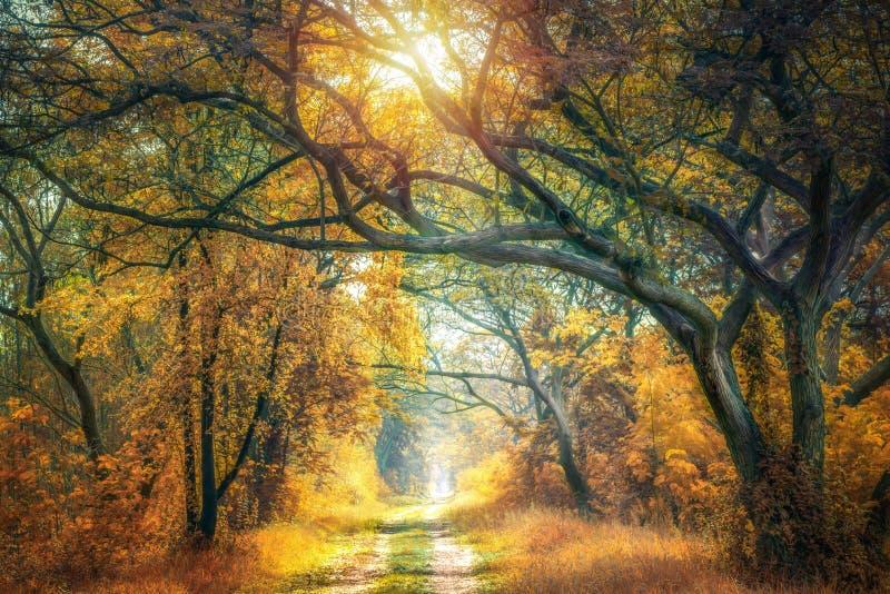 Золотой лес осени с пропуском дороги до конца стоковые изображения rf