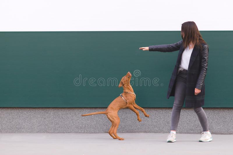 игры владельца с щенятами на фоне стены Игры собаки на фоне стен стоковое фото rf