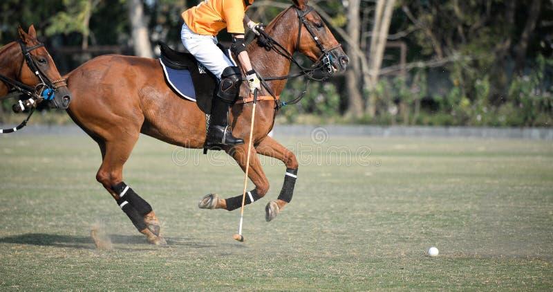 Игрок поло лошади играет в спичке стоковое изображение rf