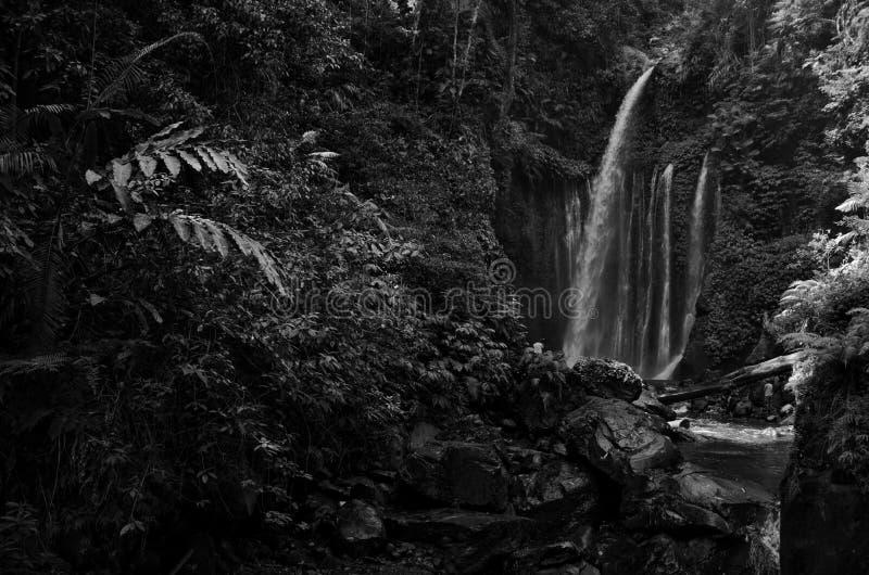 Изумляя водопад Tiu Kelep изящного искусства черно-белый около Rinjani, Senaru Lombok Индонезии Юго-Восточная Азия стоковая фотография