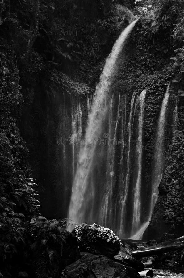 Изумляя водопад Tiu Kelep изящного искусства черно-белый около Rinjani, Senaru Lombok Индонезии Юго-Восточная Азия стоковое изображение rf