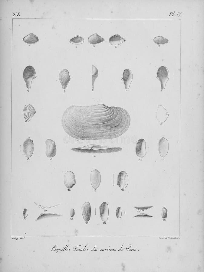 Изображение искусства белизна иллюстрации фингерпринта предпосылки стоковая фотография