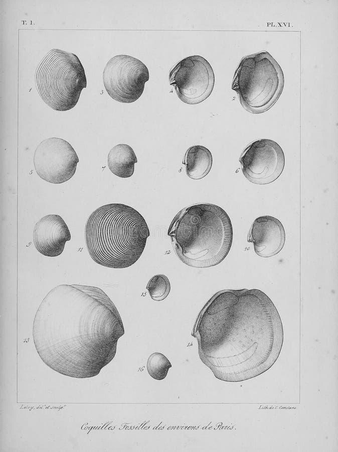 Изображение искусства белизна иллюстрации фингерпринта предпосылки стоковое изображение
