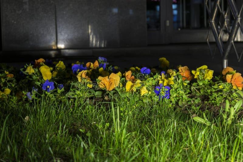 Изображение ночи флористического жужжания загоренного рефлектором стоковое изображение