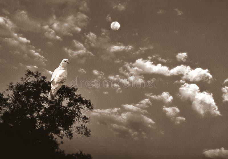 Иллюстративное изображение голубя на ветви дерева с луной в небе стоковая фотография