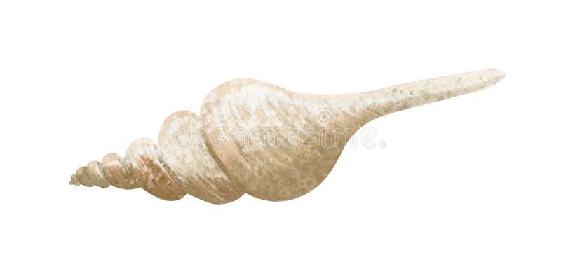 Иллюстрация акварели руки вычерченная seashell на белой предпосылке иллюстрация штока