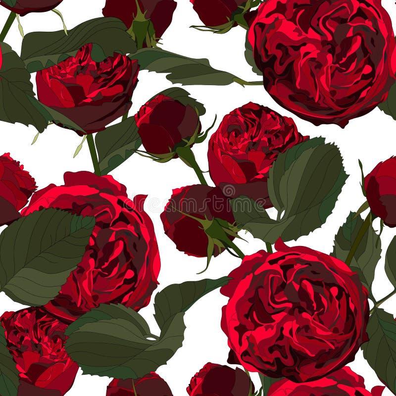 Иллюстрация красных роз и листьев Безшовная картина цветков цветения на белой предпосылке иллюстрация вектора