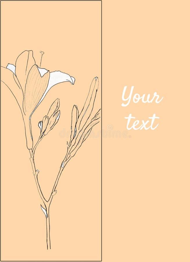 Иллюстрация дн-лилии эскиза на предпосылке персика Красивая ветвь Линия искусство иллюстрация вектора