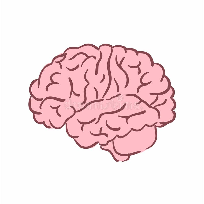 Иллюстрация человеческого мозга иллюстрация вектора