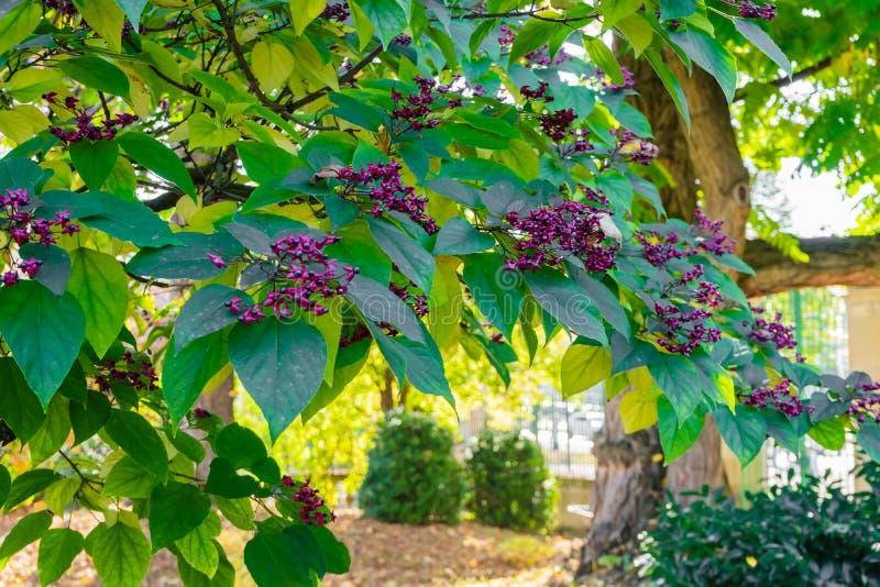 Индийское дерево beutifull корня стрелки стоковое изображение rf