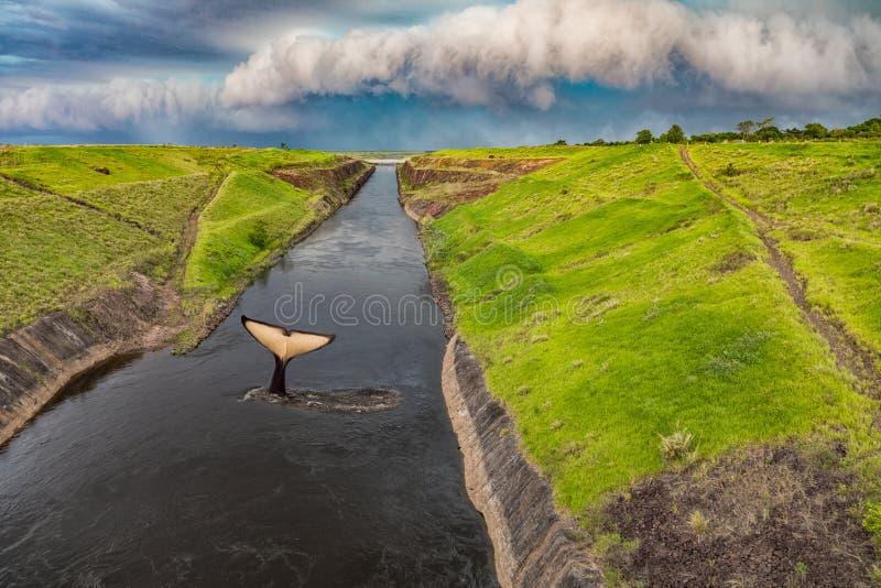 Кабель кита в канале del Aguapey около городка Сан Cosme y Damian в Парагвае стоковое изображение