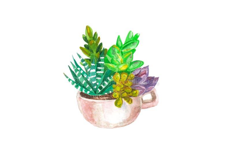 картина акварели безшовная кактусов и succulents желтый цвет акварели стародедовской предпосылки темный бумажный стоковая фотография rf