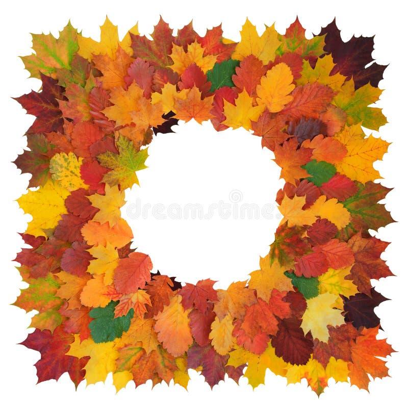 Квадрат сформировал декоративную рамку сделанную из красочных клена падения, боярышника и изолированных листьев липы, на белизне стоковое фото rf