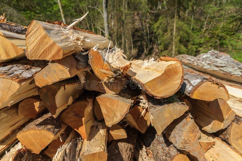 Куча прерванной древесины входит в систему лес стоковое изображение rf