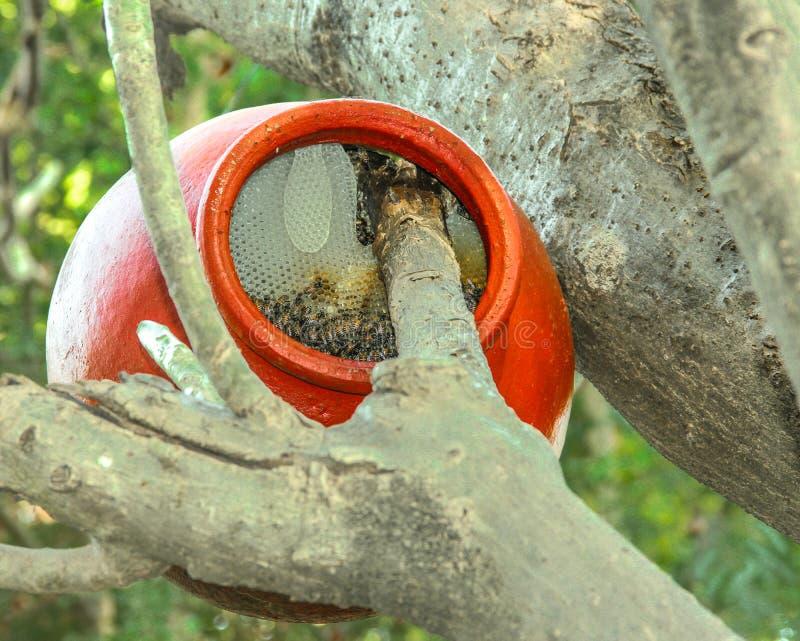 Крапивница пчелы в баке стоковая фотография