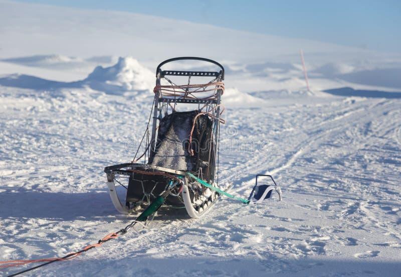 Красивая 6 команд собаки вытягивая скелетон в красивом пейзаже утра Норвегии Спорт зимы для любовников собаки стоковое изображение