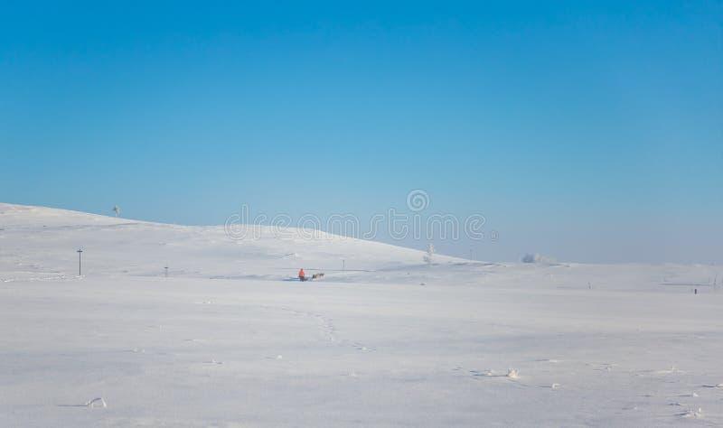 Красивая 6 команд собаки вытягивая скелетон в красивом пейзаже утра Норвегии Спорт зимы для любовников собаки стоковые изображения