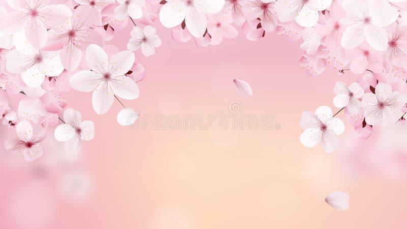 Красивая печать с цвести светом - розовыми цветками Сакуры с местом для текста Вишня на предпосылке рассвета вектор иллюстрация штока