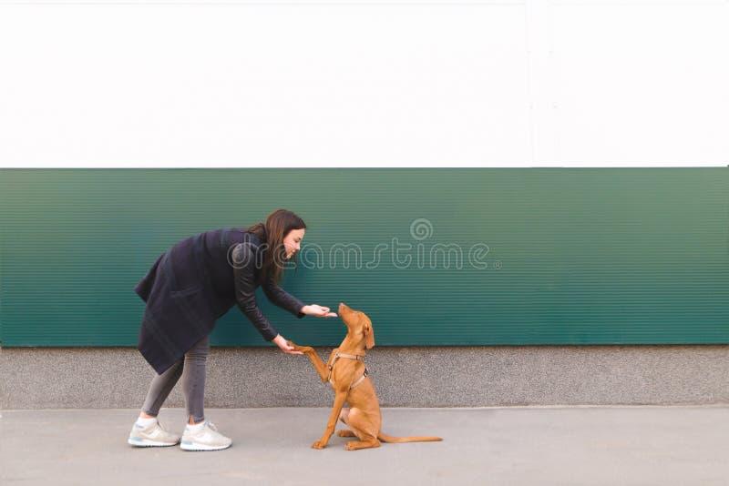 Красивая девушка с молодой собакой на предпосылке покрашенной стены гулять собаки стоковая фотография