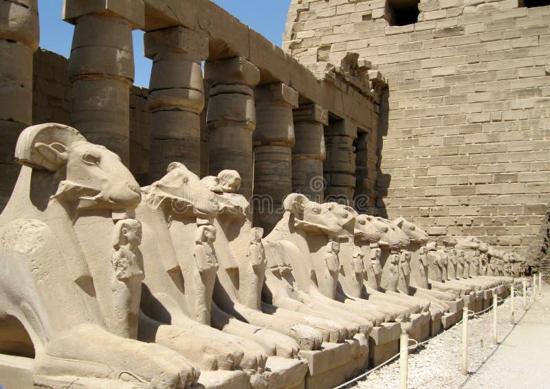 красивейший Египет стоковая фотография