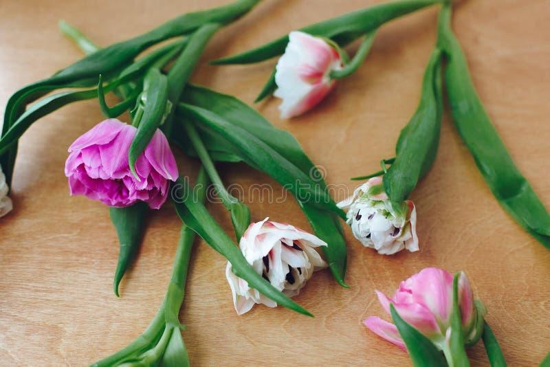 Красивые двойные тюльпаны пиона на деревянном столе Красочный пинк и пурпурные тюльпаны, стильный цветочный узор мати дня счастли стоковое изображение
