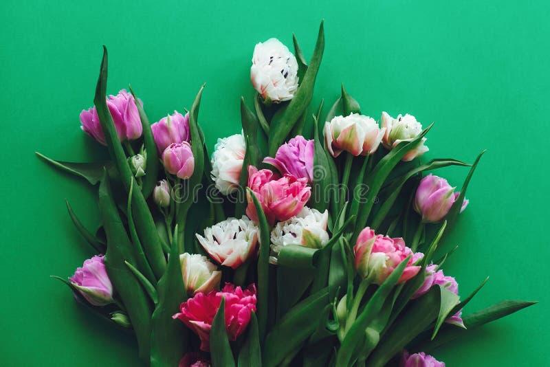 Красивые двойные тюльпаны пиона плоско кладут на зеленую книгу, космос экземпляра Красочный пинк и пурпурные тюльпаны мать s дня  стоковое изображение rf
