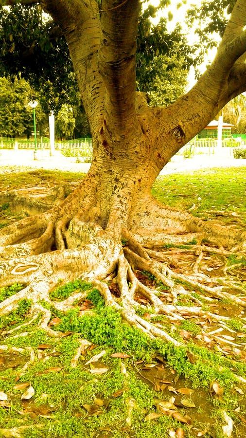 Красивые дерево, ствол дерева и кусты с естественными фоновым изображением светового эффекта солнца и дизайном обоев стоковое фото