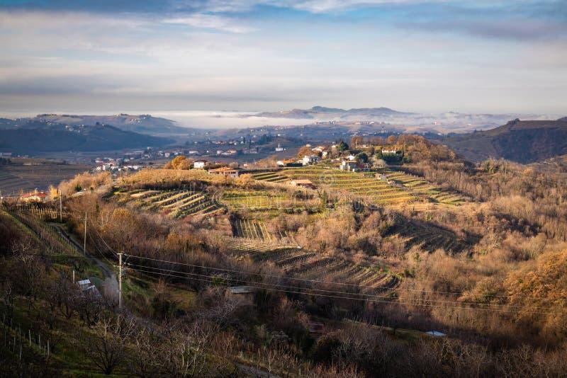 Красивые террасы виноградника в brda в солнечном свете wintertime, Словении goriska стоковое фото