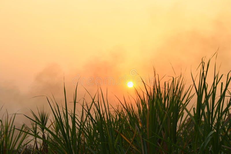 Красивый желтый ландшафт природы зеленого поля с солнцем на заходе солнца - Изображение стоковая фотография