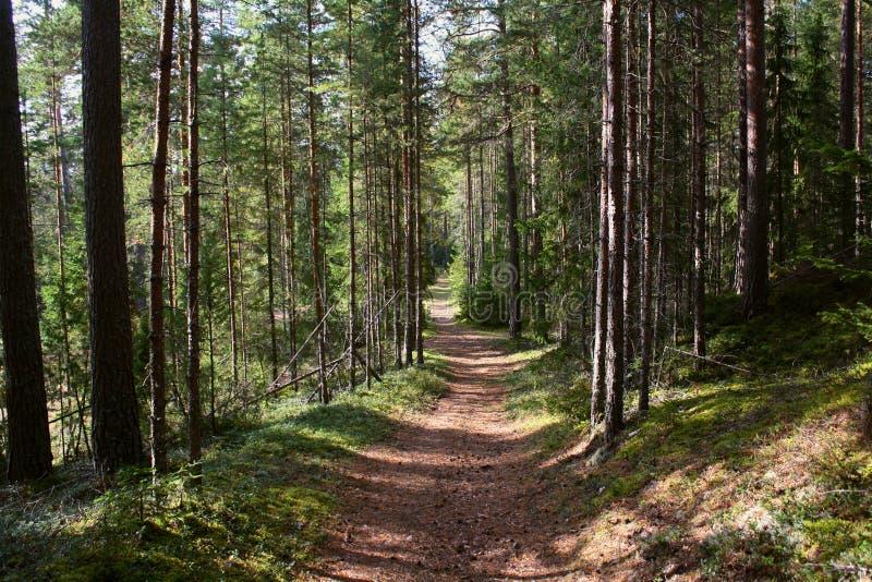 Красивый зеленый путь леса в Швеции стоковые фото