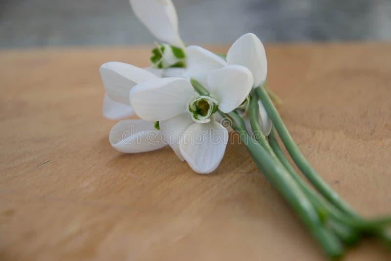 Красивый крупный план nivalis Galanthus цветков snowdrop, рамка весны, деревянная доска стоковое изображение